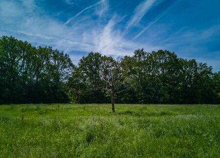 Green clearing with dry tree near path high trees and blue cloudy sky