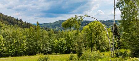 High thin curvy white birch-tree next to big glade in front of small forest Zdjęcie Seryjne