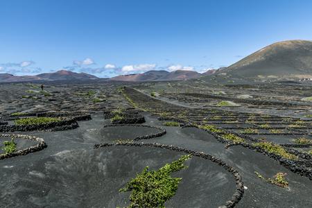 ランサローテ島 - 火の山とワイン産地ラジェリア