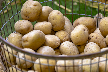 Market stall with unpeeled potatoes in metal basket Imagens