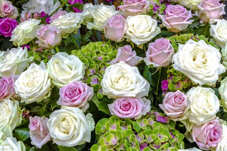 Bouquet of white and pink roses with green flowering hydrangeas Standard-Bild - 127443912