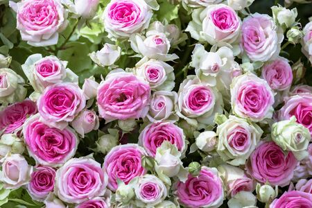Bouquet with white pink roses Standard-Bild - 127443915