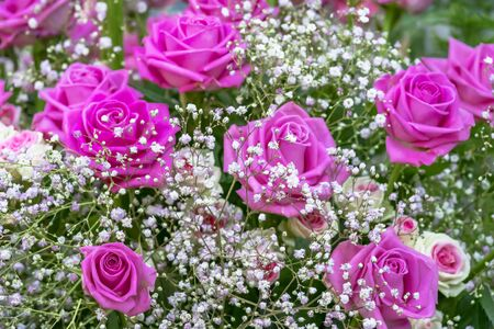 Bouquet with pink roses and gypsophila Standard-Bild - 127443916