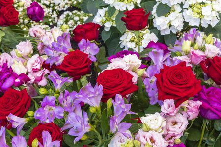 Bouquet of red roses and light blue freesia 版權商用圖片