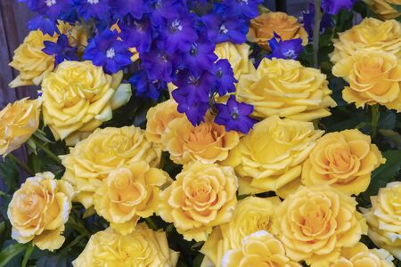 Bouquet with yellow roses and blue larkspur 版權商用圖片