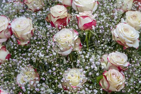 Bouquet with white red roses and gypsophila Standard-Bild - 127444094