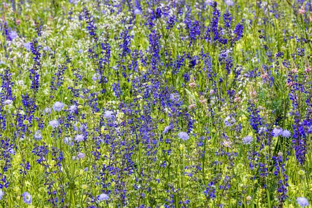 Summer meadow with meadow sage Фото со стока