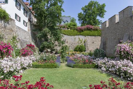 Rose garden at the Electoral Castle in Eltville am Rhein