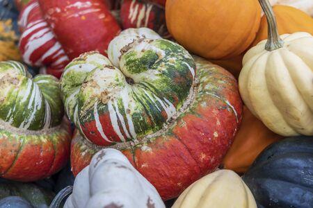 Close up of a pumpkin bishop's cap