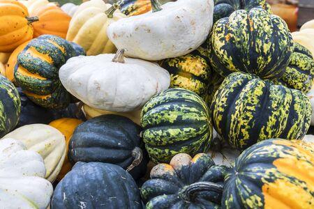 Pumpkin varieties Patisson, Sweet Dumpling, Accorn and Halloween