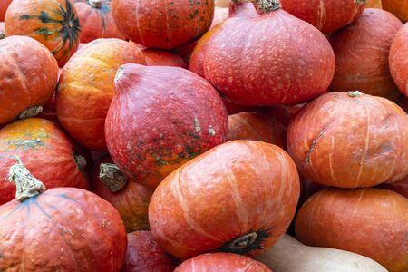Close up of Hokkaido pumpkins