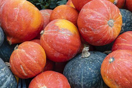 Close up of Hokkaido and Accorn pumpkins Фото со стока