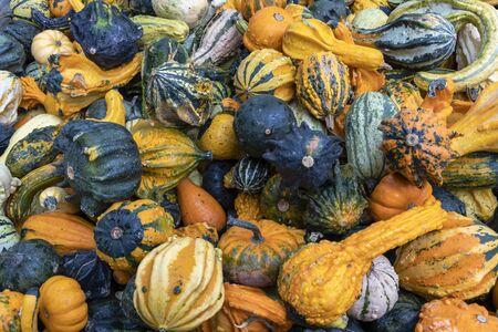 Close up of ornamental pumpkins