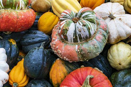 Pumpkin Varieties Bishop Hat, Patison, Sweet Dumpling, Accorn and Halloween Фото со стока