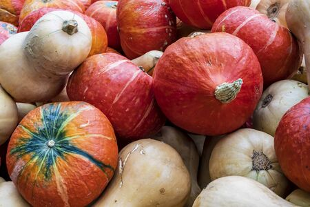 Close up of hokkaido and butternut pumpkins