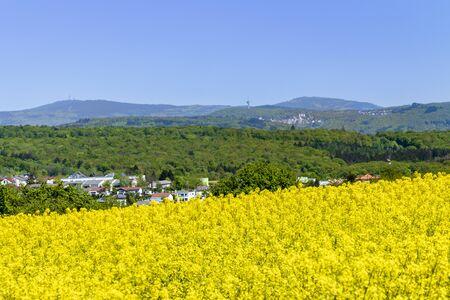 Feldbergblick in Wiesbaden Naurod with flowering rape field Фото со стока