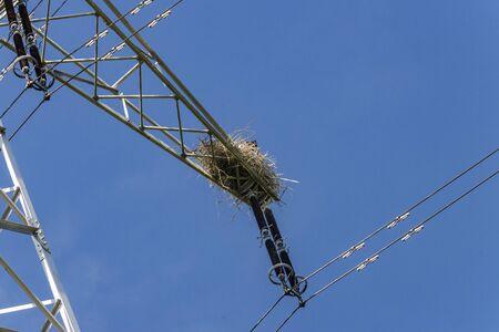 Stork nest in a high voltage pylon in Wiesbaden Schierstein Фото со стока