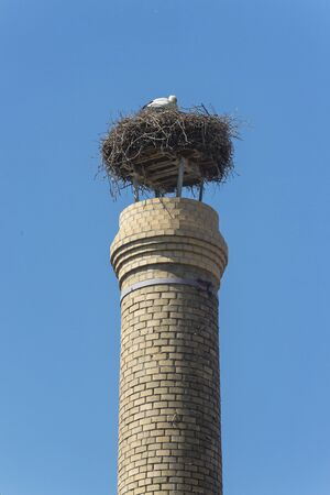 Stork nest on a chimney in Wiesbaden Schierstein Фото со стока