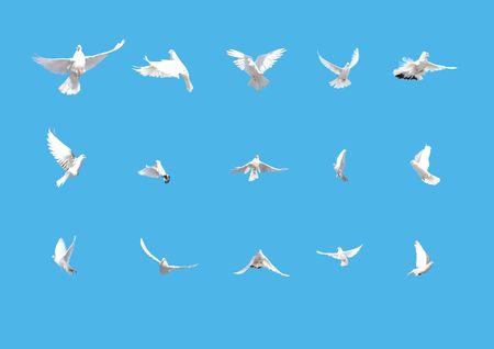 palomas volando: conjunto de palomas volando sobre fondo azul aislado