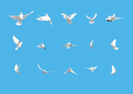 set of flying doves isolated on blue background Stock Photo