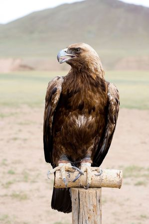 golden eagle is sitting on a pole