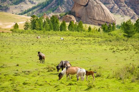 livestock sector: group of horses grazing at green pasture