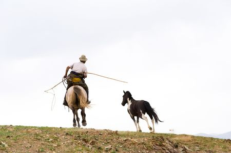 mongolia horse: horse catching with a lasso in Mongolia
