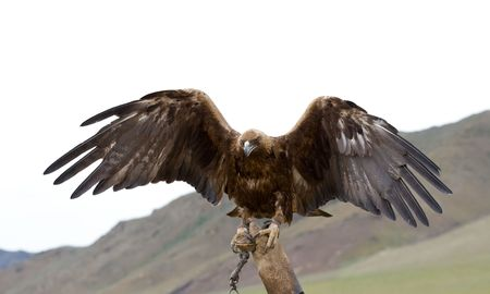 chained golden eagle with spread wings on gauntlet