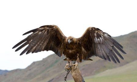 aguila real: encadenados �guila con las alas separadas en guantelete