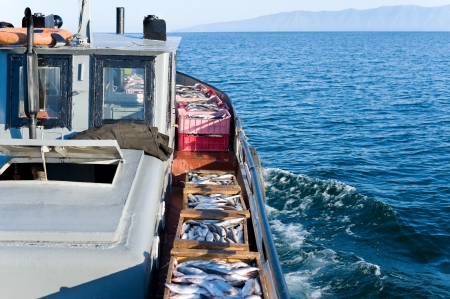 fresh water fish: a boat carries boxes with fresh fish, just caught