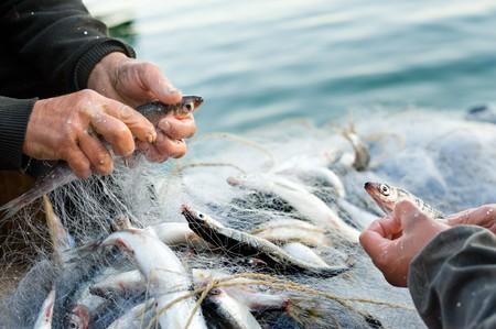 escamas de peces: manos toman pescado fuera de una red  Foto de archivo