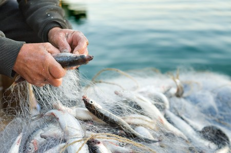 hands take fish out of a net Stock Photo - 7451901