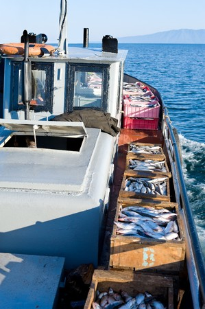 work boat: a boat carries boxes with fresh fish, just caught