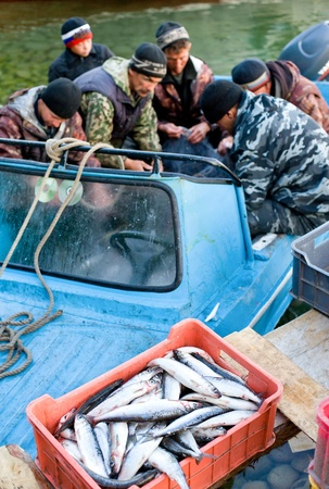 buryatia: UST-BARGUZIN, RUSSIA - JUNE 21: A local fishing artel unloads its catch after a morning fishing, June 21, 2010 in Ust-Barguzin, Buryatia, Russia. Editorial