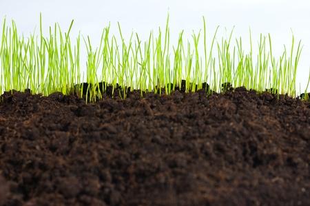nourishing: j�venes peque�o verde c�sped en suelo de humus, macro