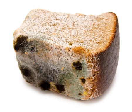 mouldy: half a loaf of mouldy rye bread