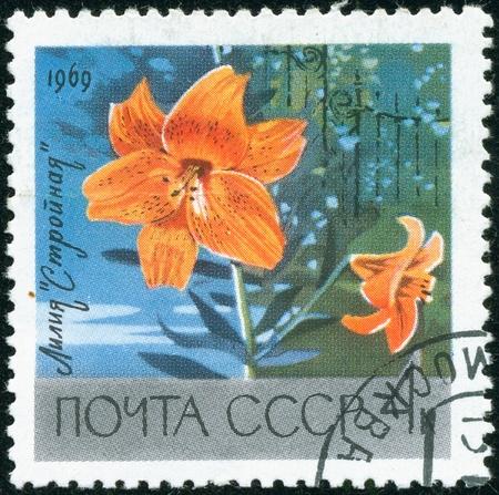 """UNION SOVIETICA - CIRCA 1969: Un sello impreso por la Unión Soviética mensaje muestra un lirio (Lilium), de la """"Stroynaya"""" raza, alrededor de 1969"""