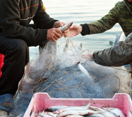 fishers take fish out of a net Stock Photo - 12540645