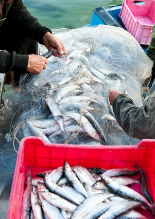 fishers take fish out of a net Stock Photo - 12540588