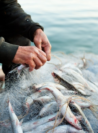 hands take fish out of a net photo