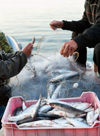 fishers take fish out of a net photo