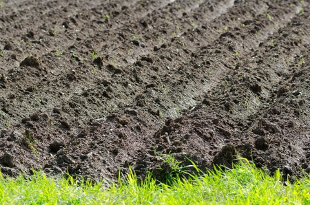 furrow: plowed field on a bright summer day