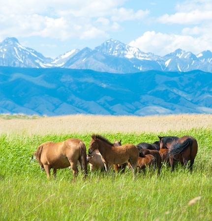 livestock sector: a group of horses grazing at green pasture