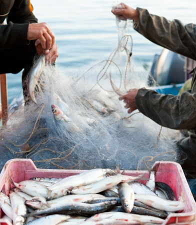 two fishers take fish out of a net photo