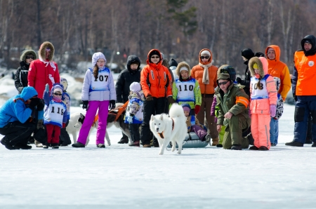 mushing: YARTSI, RUSSIA - APRIL 14  At annual Baikal Fishing the 1st Mushing on inner tubes was run, Apr 14, 2012, Yartsi, Buryatia, Russia  A Samoyed dog pulls an identified girl on a tube on ice