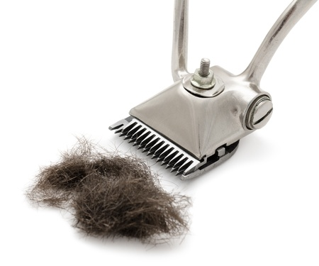 hairclipper: a hand hairclipper with a tuft of cut hair