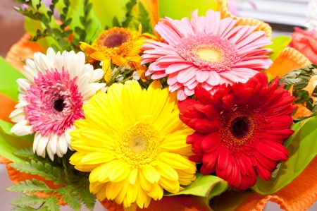 closeup of pink daisy with: a bouquet of colorful African daisies, closeup