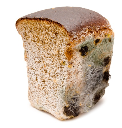 uneatable: half a loaf of mouldy rye bread
