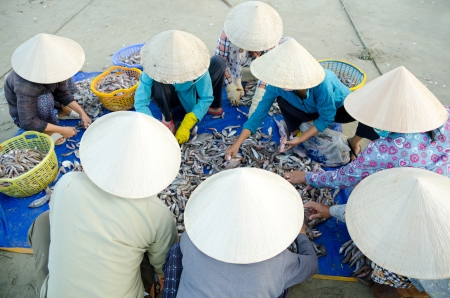sort out: group of Vietnamese fishers sort out their catch
