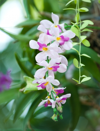 punctuate: pink and white artificial orchid on green tree